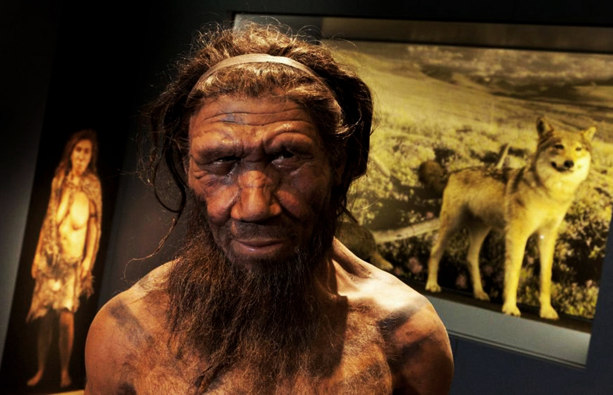 Neanderthal use of medicinal plants