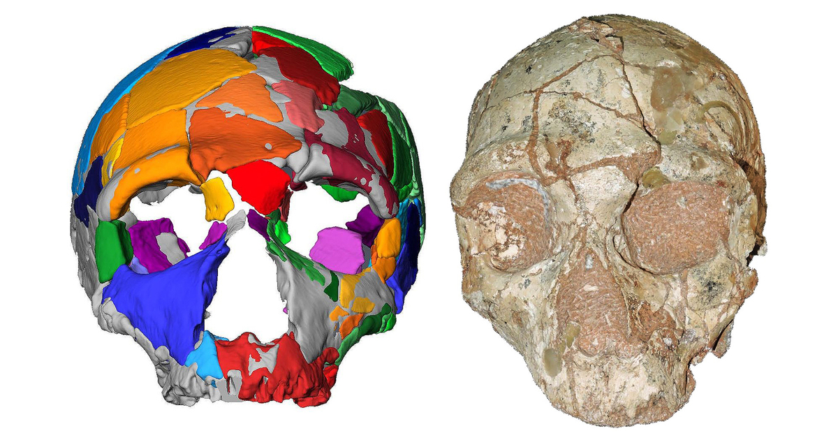 he Apidima 1 partial cranium and its reconstruction