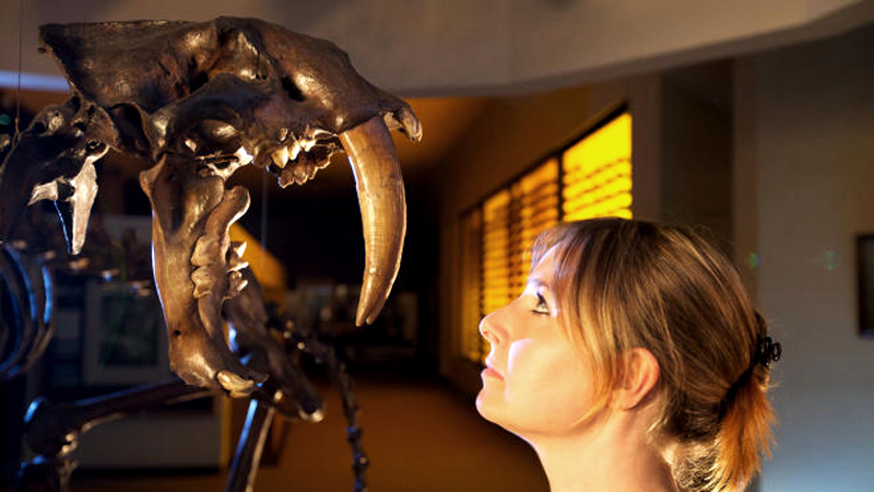 Ice Age Giants with Alice Roberts