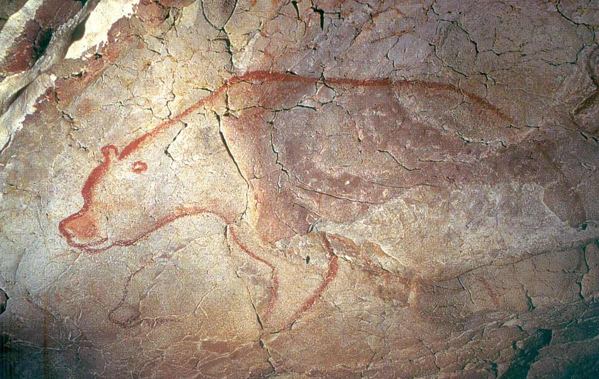 Modern brown bears carry genetic material passed down from the cave bear. This indicates that extinction does not always vanquish a species' genes. Chauvet rock art.