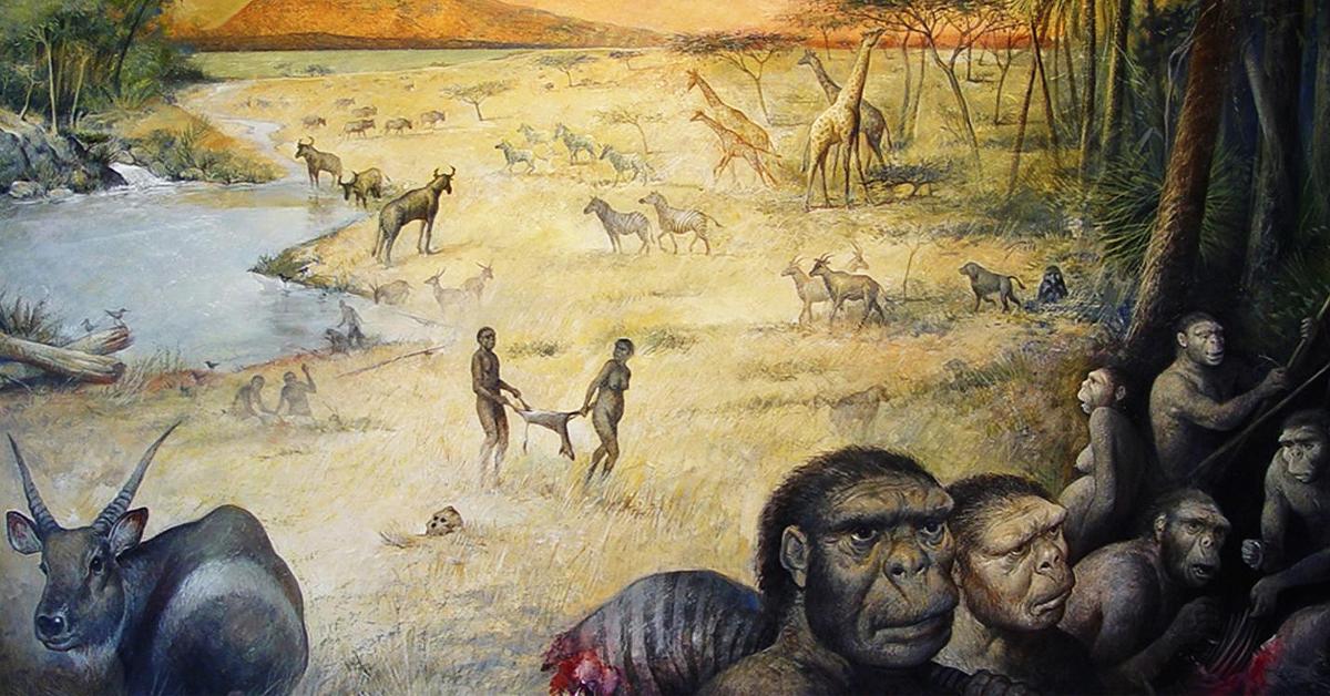 Early human ancestors habitat