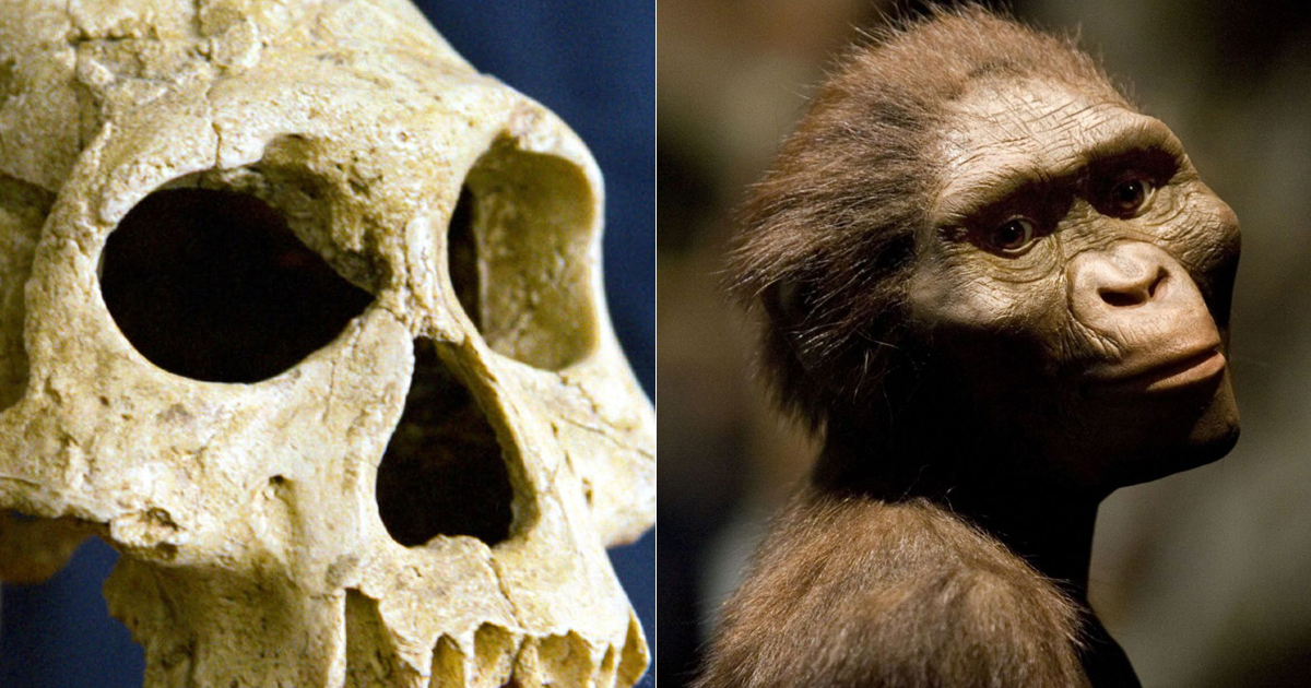 Humans have maintained their height and weight following the emergence of homo erectus