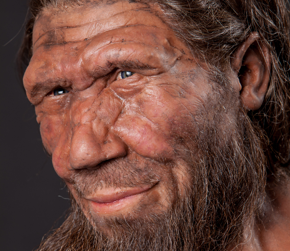 excavations reveal diet neanderthals