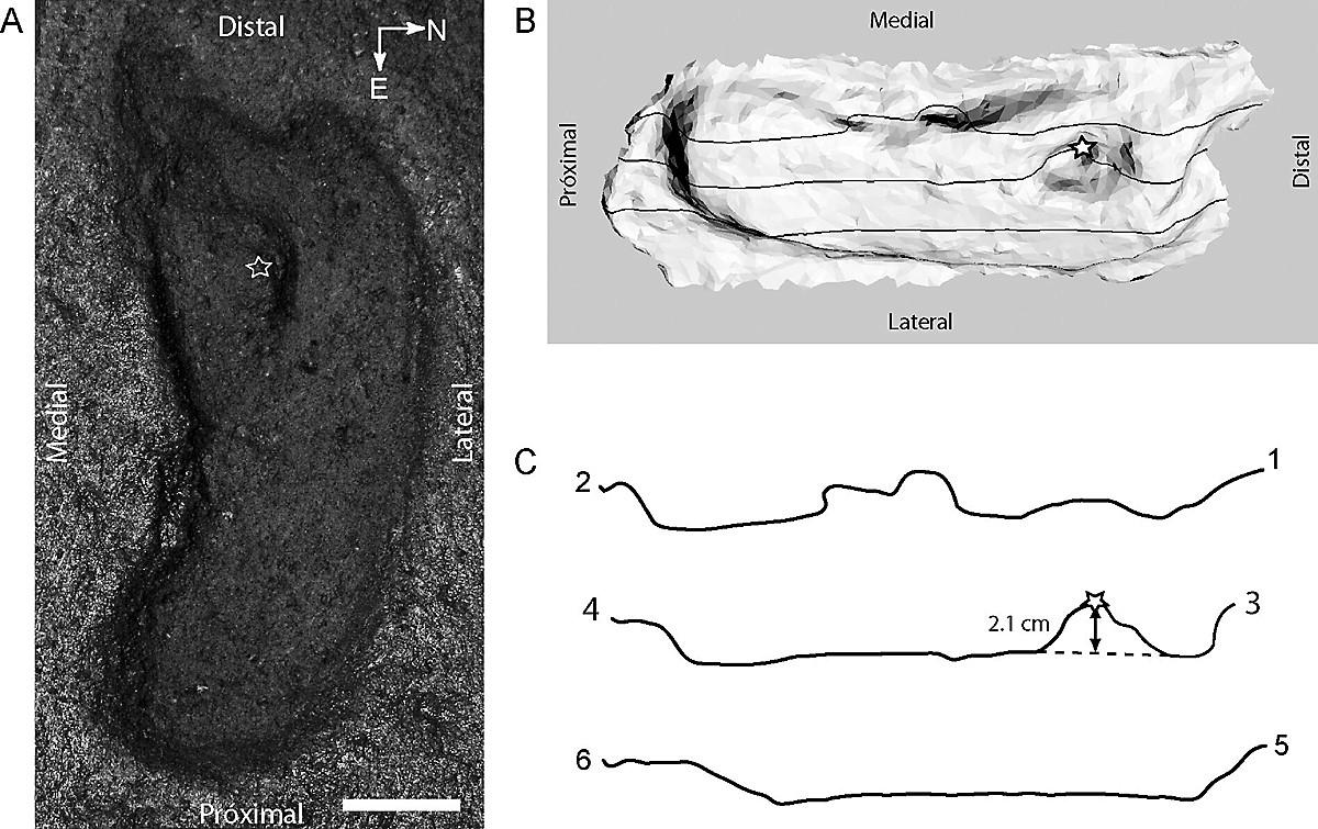 Earliest human foot print in the Americas