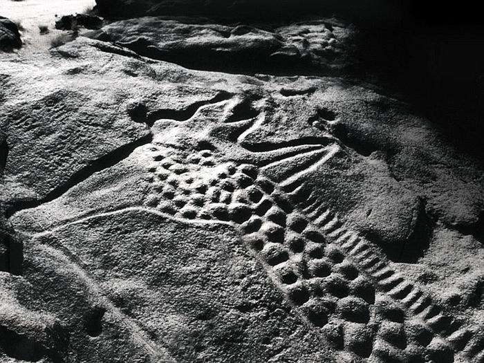 the worlds largest rock art petroglyph dabous giraffe - 700×525