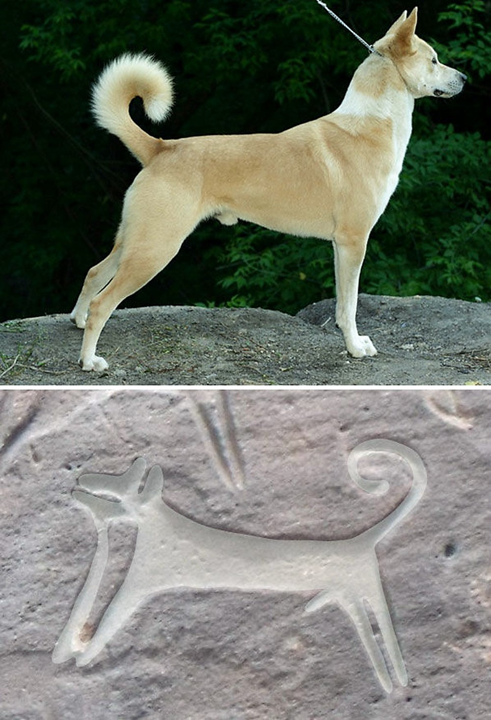 First rock art images of hunting with dogs in Saudi Arabia