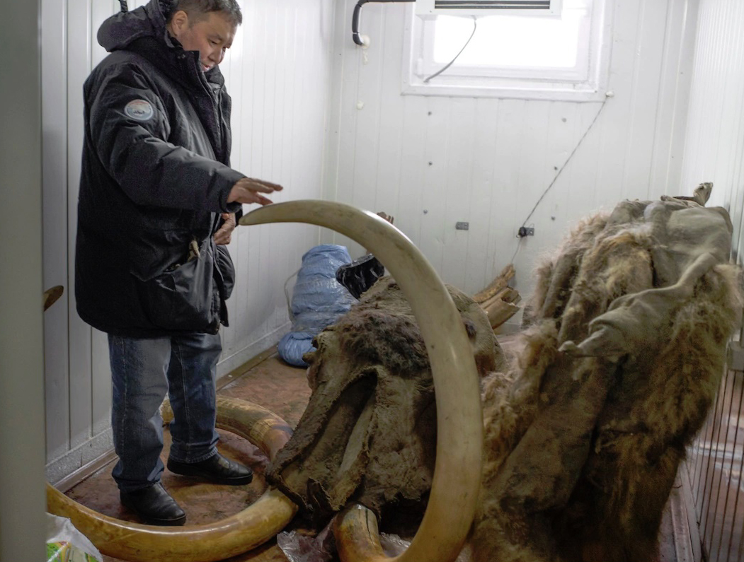 Woolly mammoth that was preserved in the permafrost