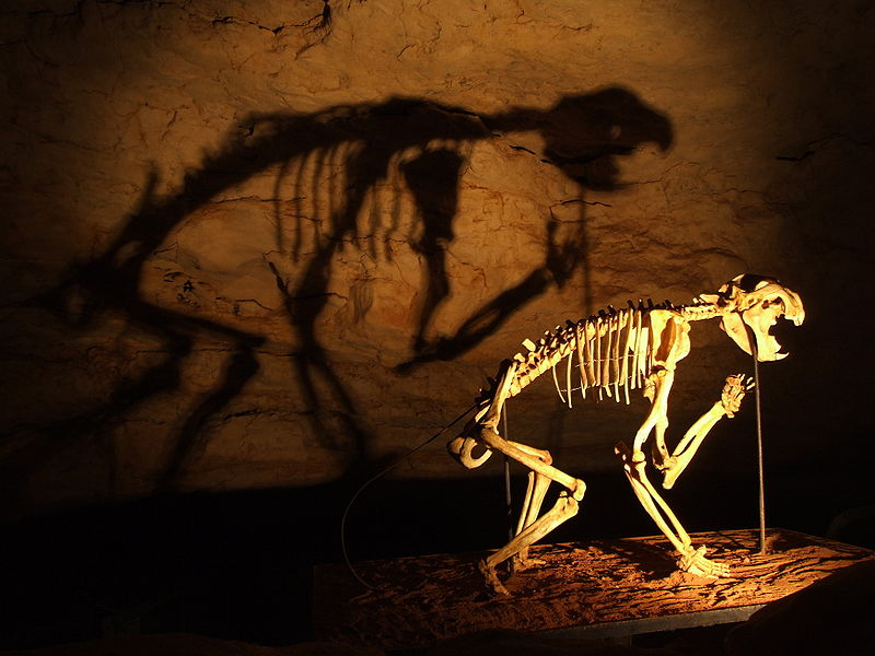 Linking Australian megafauna extinction to arrival of humans