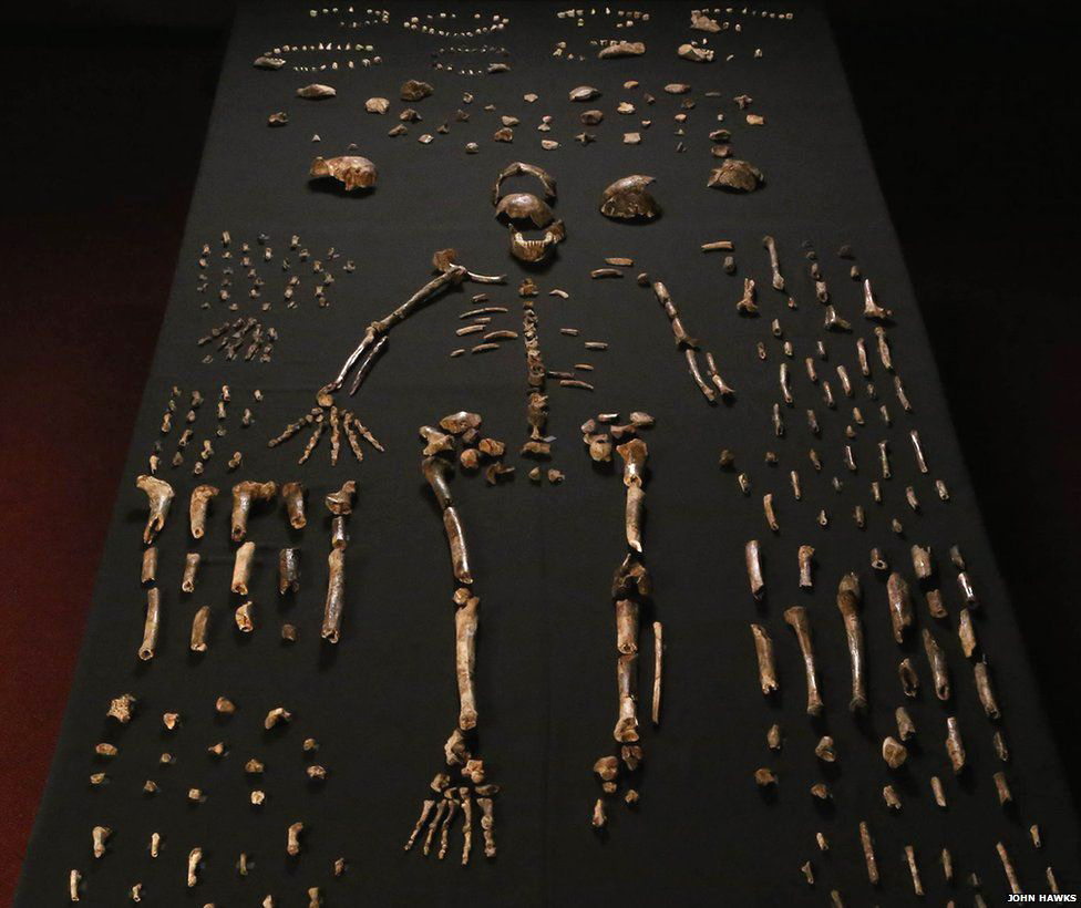New human species discovered in South Africa