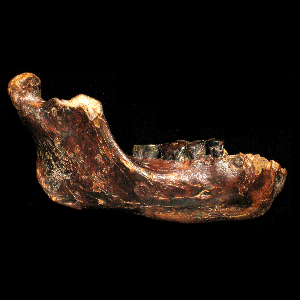 Penghu1 fossil reveals new hominin in Asia