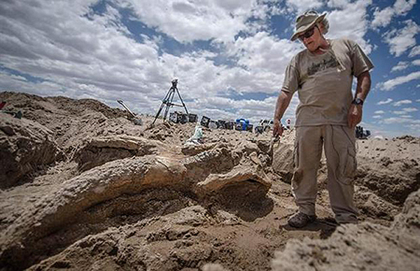 Excavation Prehistoric Elephant Skull New Mexico