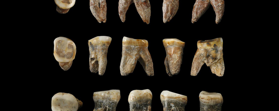 fossils found in china may be from a new human species