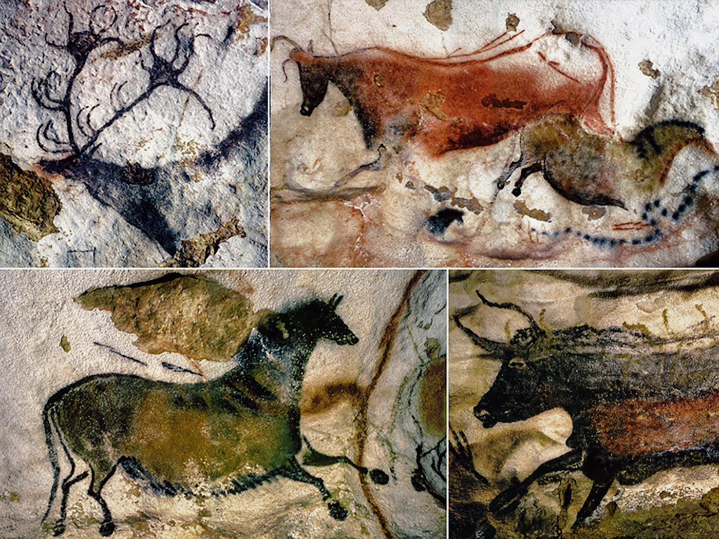 cave art lascaux cosquer cave Cave art : jean clottes as the famous horses of lascaux, the buffalo in the altamira cave in spain and the ivory the underwater cosquer cave discovered in.