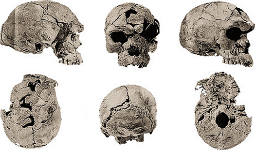 Uncover the history of our ancestors by dating human fossils