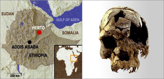 Discovery of earliest Homo sapien skulls backs 'Out of