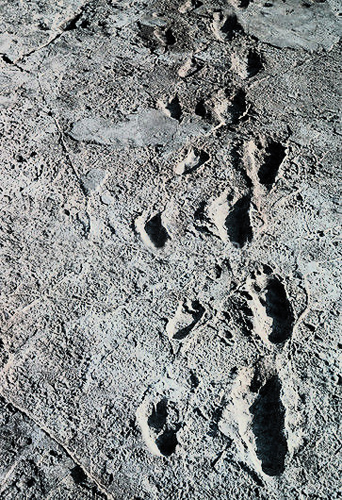 Early bipedal footprints saved in volcanic rock