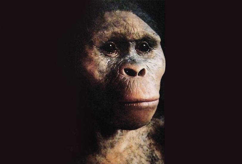 Resultado de imagen de australopithecus afarensis lucy
