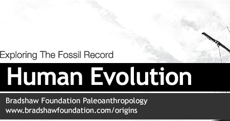 the evolution of modern humans essay Evolution from apes to humans  is there any role of tools in evolution the brain of a modern human consumes about 20 watts (400 kilocalories per day),.