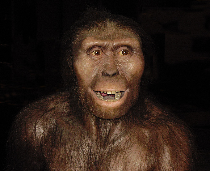 Resultado de imagen de Australopithecus afarensis