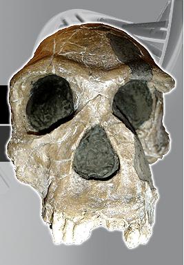Orrorin Tugenensis SkullOrrorin Tugenensis Fossil