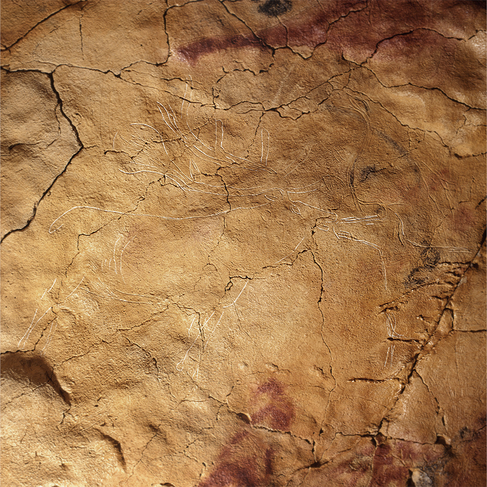 Engraved deer Cave Art Paintings Altamira Spain Archaeology