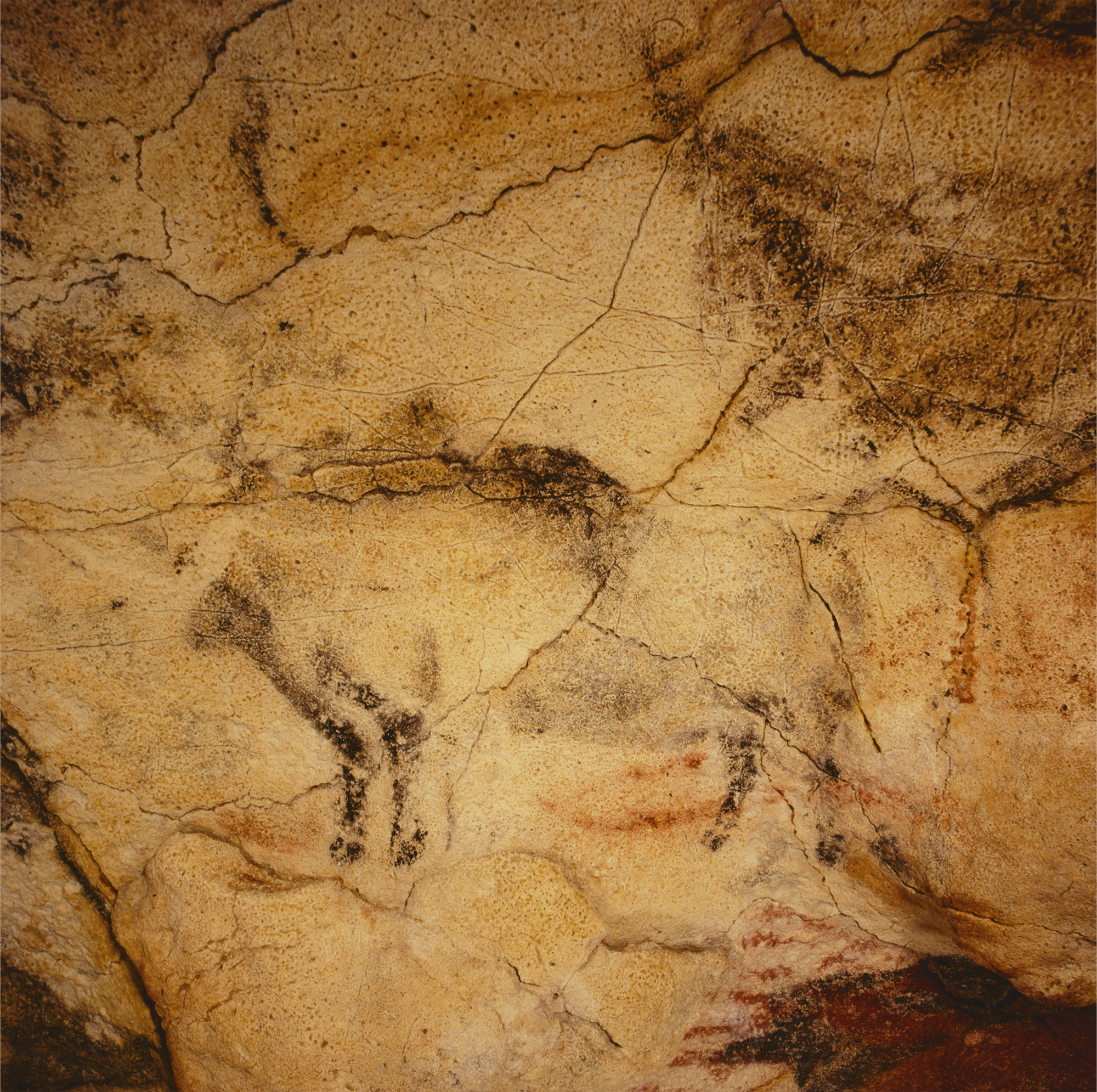 Black Bison Cave Art Paintings Altamira Spain Archaeology