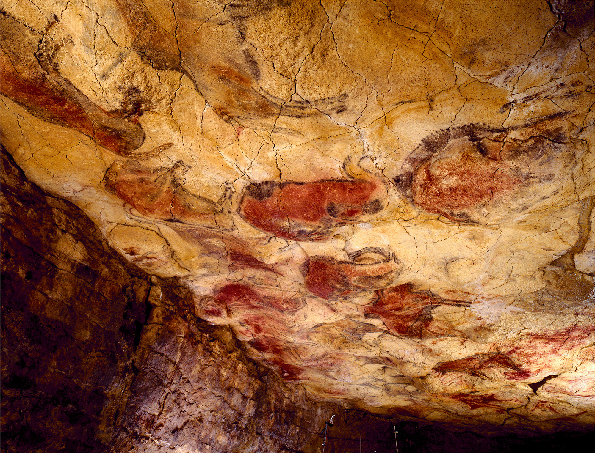 Polychrome ceiling Altamira Cave Art Paintings Spain