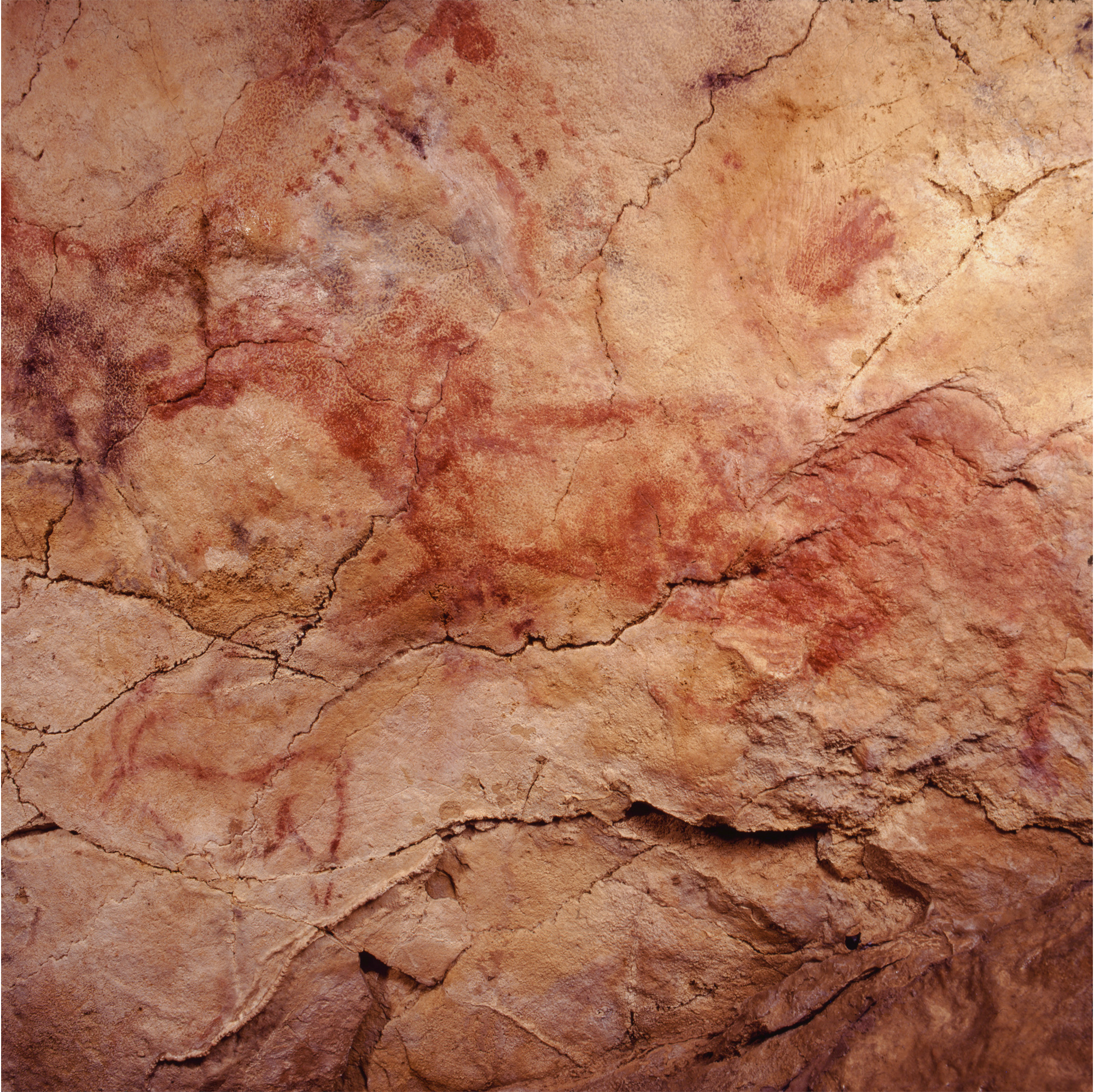 Red Horse Cave Art Paintings Altamira Spain Archaeology